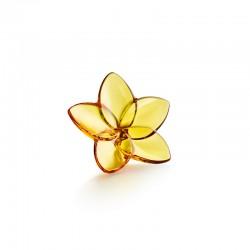 Bloom Amber