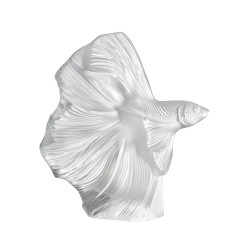 Large Fighting Fish Clear